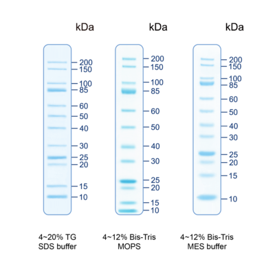 Pmu12 unveil unstained protein ladder